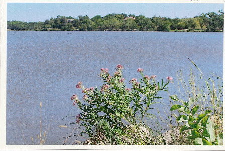 Wildflowers at Herington Lake